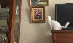Leaping Cat Causes Frames to Fall