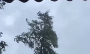 Begging Tree to 'Hold Strong' During Hurricane