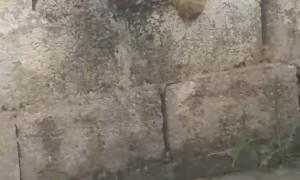 Weird Dog Makes Mess on Walls