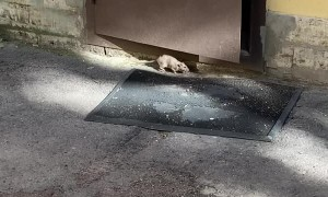 Runaway Rat Attacks Camera Operator