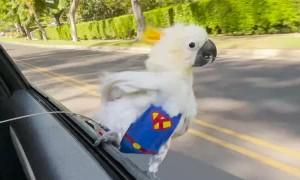Super Bird Surfs From Car