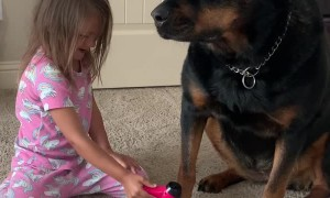 Patient Rottweiler Maya Gets Pampered on Spa Day