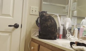 Cat Stares Back With Makeup Mirror