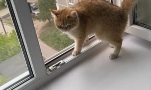 Kitty Slides on Window Sill