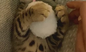 Kitty Loves Cuddling His Favorite Hamster Toy