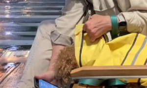 Woman humorously shows her dog tomorrow's weather forecast