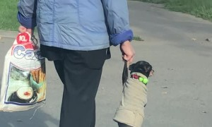 Dog and Owner Cross Street Holding Hands