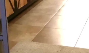 Clever Doggy Brings Her Human a Beer