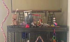 Talking Parrot Tells Cat to Quiet Down