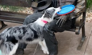 Abe Lincoln Won't Throw Frisbee for Perky Pup