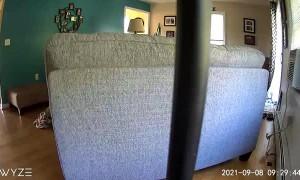 Rambunctious Dog Wreaks Havoc on Living Room Furniture