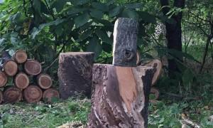 Split Log Clobbers Camera