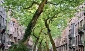 Viral Travel Video Amsterdam