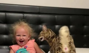 Toddler and Savanah cat adorably headbutt each other