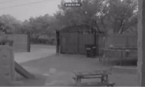 Doorbell Camera Catches Deer Running into Gate Pole