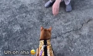 Angry cat lets stranger know her cat isn't welcome
