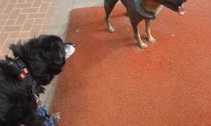 Statue Makes Dog Suspicious