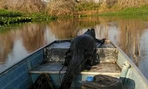 Alligator Taken on Scenic Boat Tour