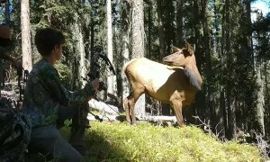 Cow Elk Close Encounter While Hunting