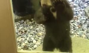 Curious Bear Cub at the Door