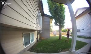 Kids Doorbell Ditching Don't Know How Video Doorbells Work