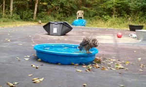 Owl Taking a Bath is Happy and Noisy