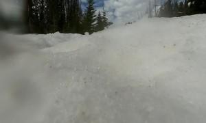 Bear Investigates Lost GoPro