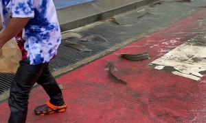 Fish Found Flopping in Street After Flood