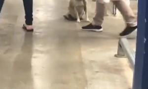 Friendly Dog Waves Goodbye to Supermarket Shoppers