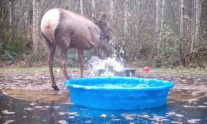 Elk Gotta Splash