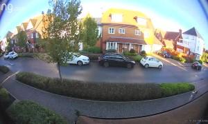 Swan Crashes Into Roof