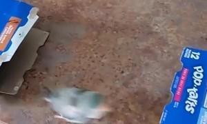 Bird Wants Both Boxes