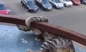 Playful Cat Nearly Falls From Balcony
