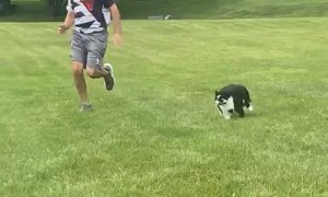 Large Cat Loves to Race