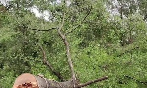 Falling Tree Slots Perfectly Into Stump
