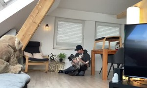Clever Doggy Shows Complete Trust