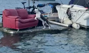 Guard Dog Protects Boat Passing By