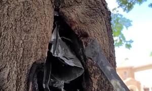 Tree Swallows Junction Box