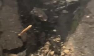 Car Meet Ends in Close Call and Broken Concrete