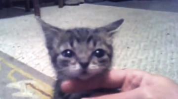 A Cat That Never Grows Up? You Can\'t Handle This Cuteness!