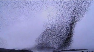 Spectacular Bird Formation Over A Lake Will Make You Gasp!