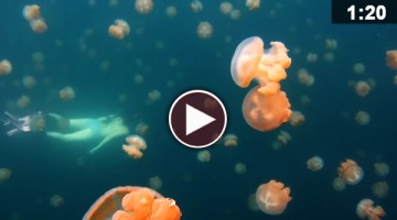 Breathtaking Footage Of A Diver Lost In A Jellyfish Lake