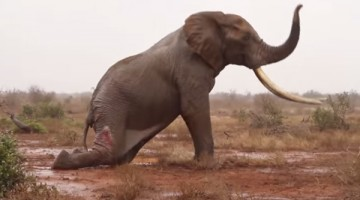 Watch This Incredible Effort To Save An African Icon