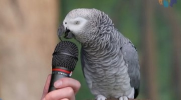This Parrot is more talented than I\'ll ever be