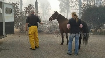 Horse rescued from deadly Californian Camp Fire
