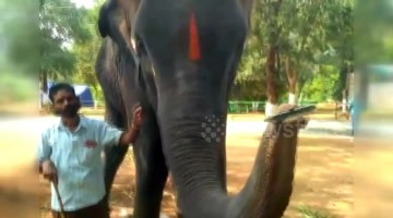 Elephant shows off harmonica-playing skills in India village