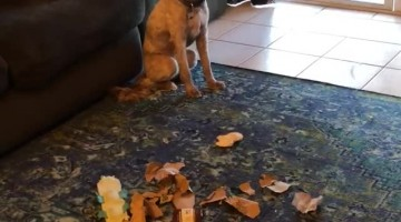 Dogs Busted Rummaging Through Garbage