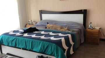 Dog Basks in Bed When Moms Gone