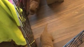 Puppies Make Escape to Mom