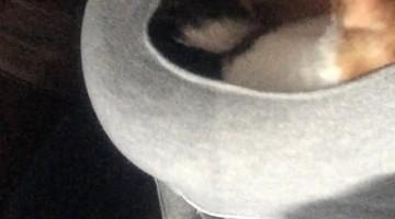Heat-Seeking Cat Climbs into Sweater